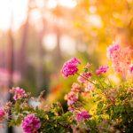 Cuida el jardín en verano
