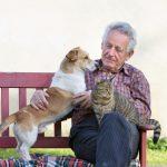Terapia animal para personas mayores: ¿cuáles son sus beneficios?